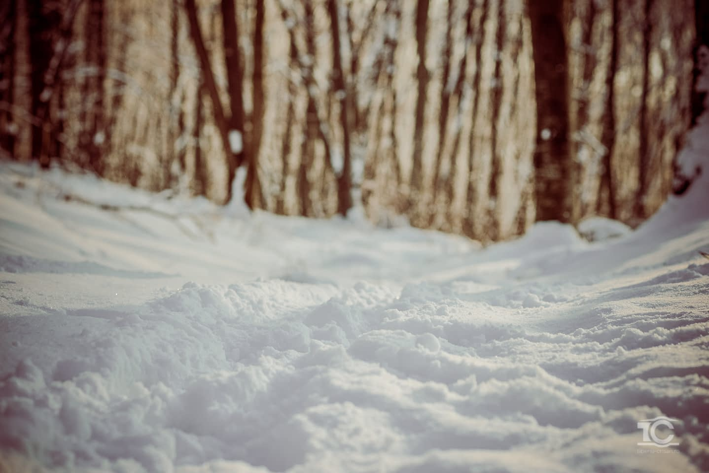iarna-feleacu-004