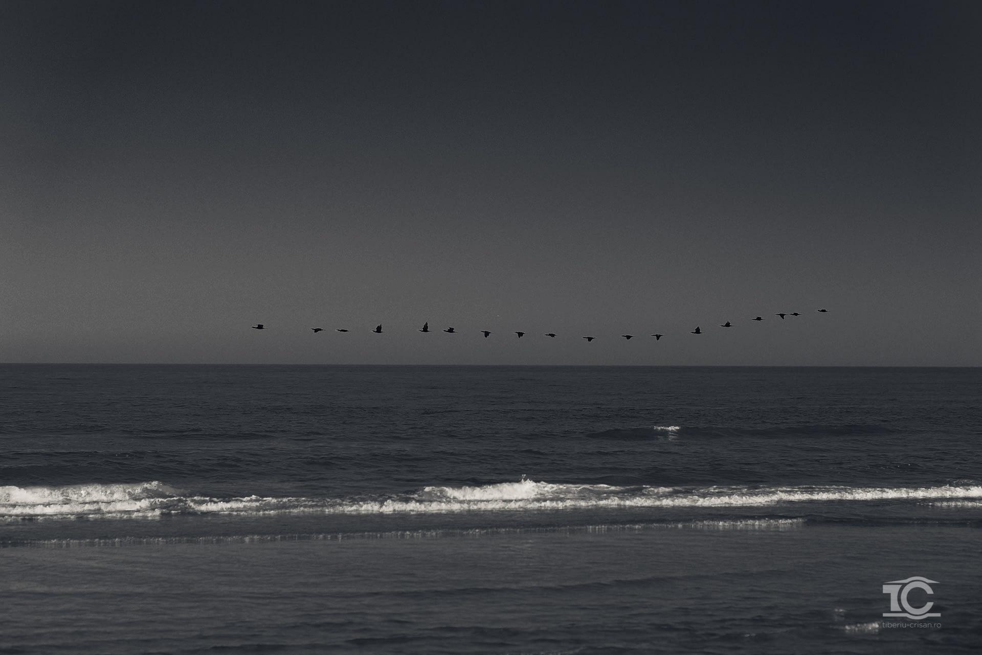 Stol de pasari pe insula Sachalin