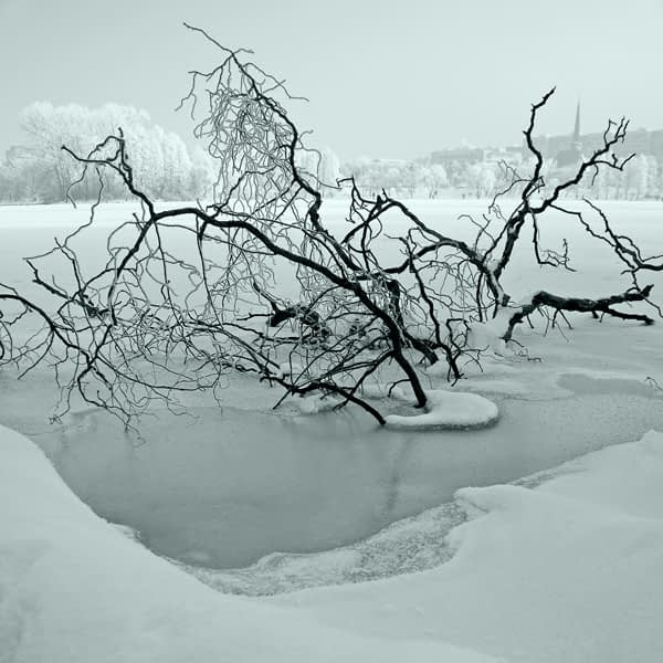 tree in the ice