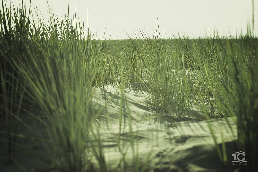 Vegetatie pe insula Sachalin