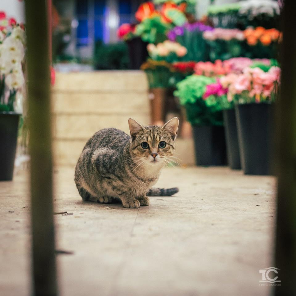 pisica-001