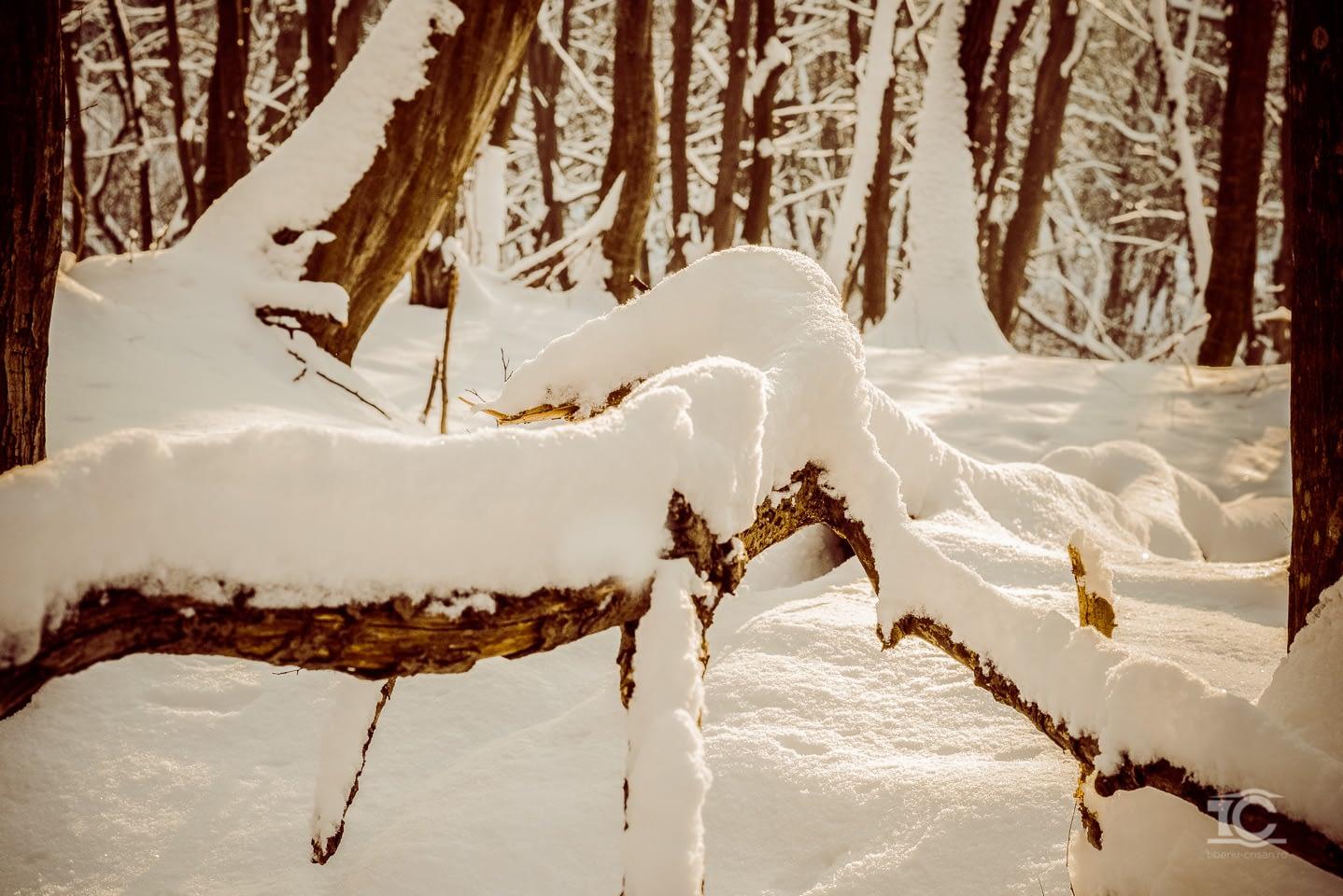iarna-feleacu-006