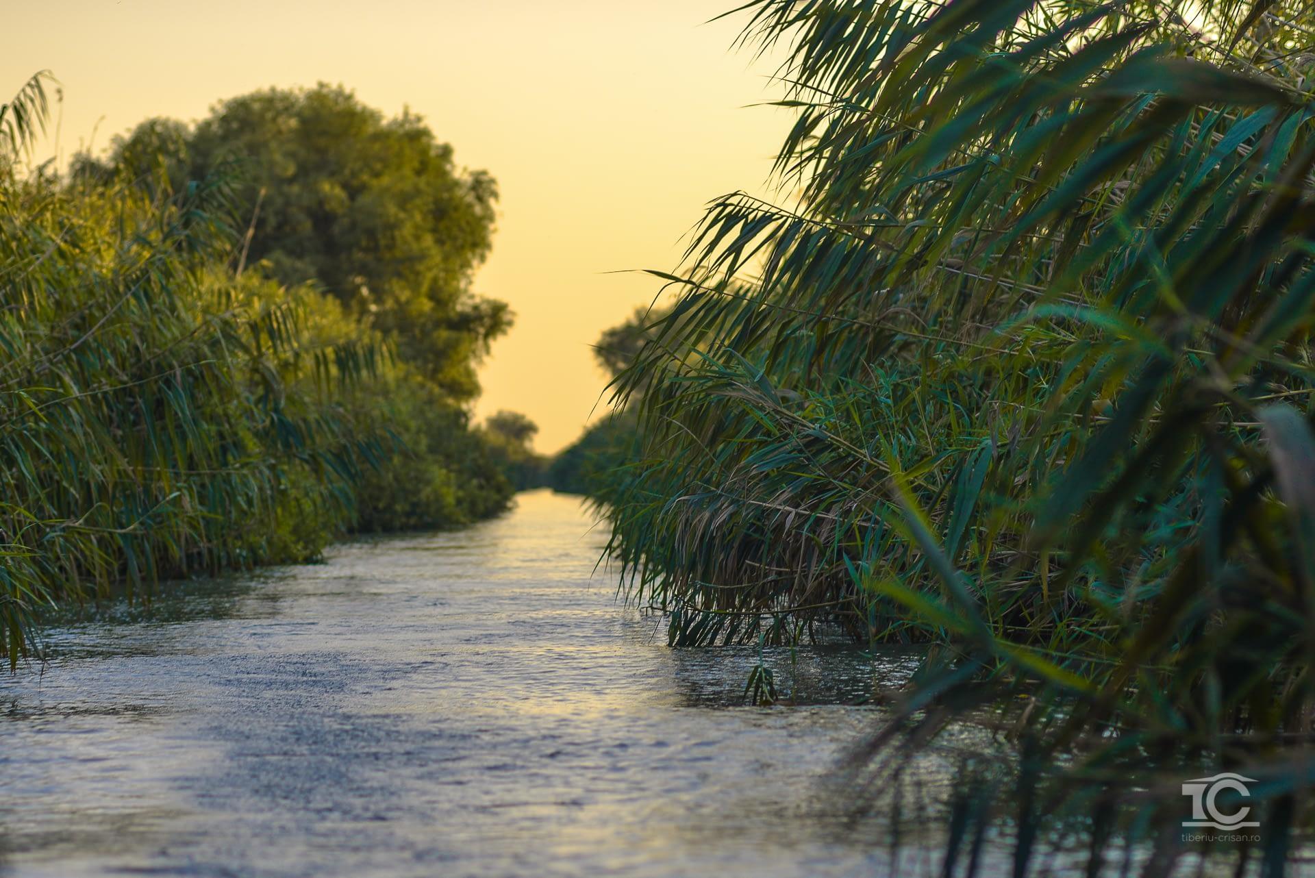 Garla Turceasca, Delta Dunarii