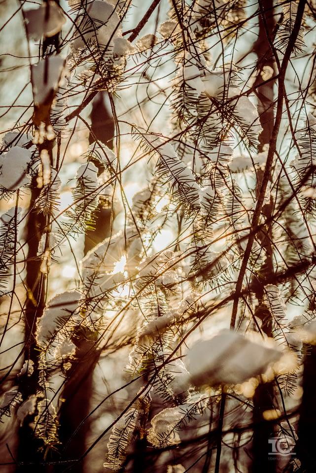 iarna-feleacu-008