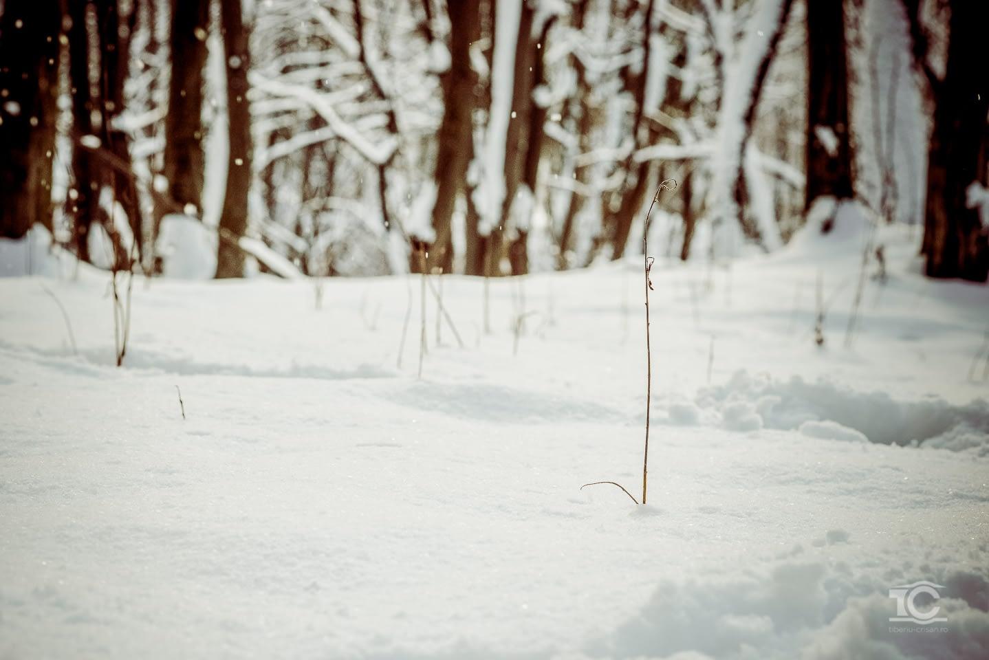iarna-feleacu-007