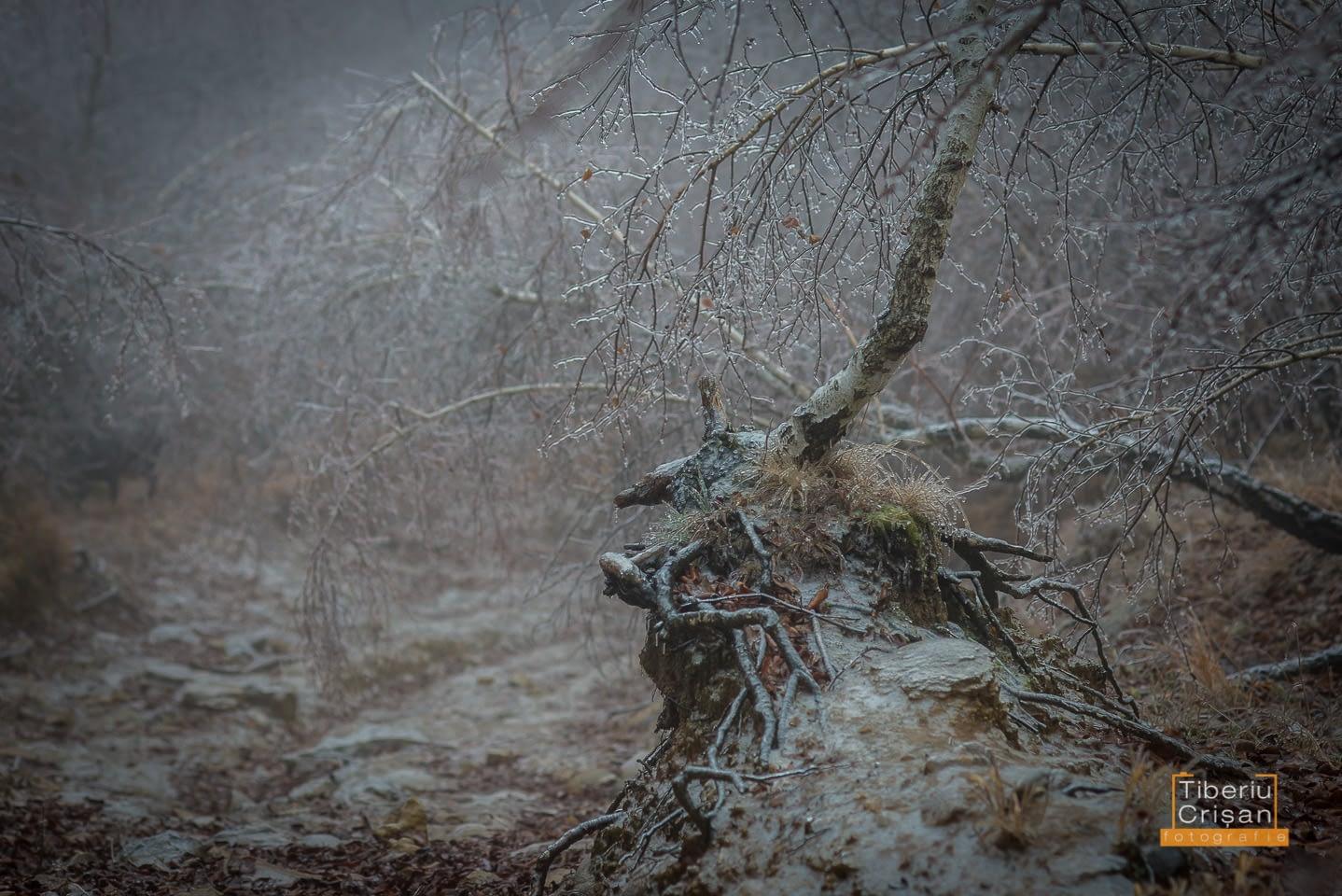 natura-inghetata-019
