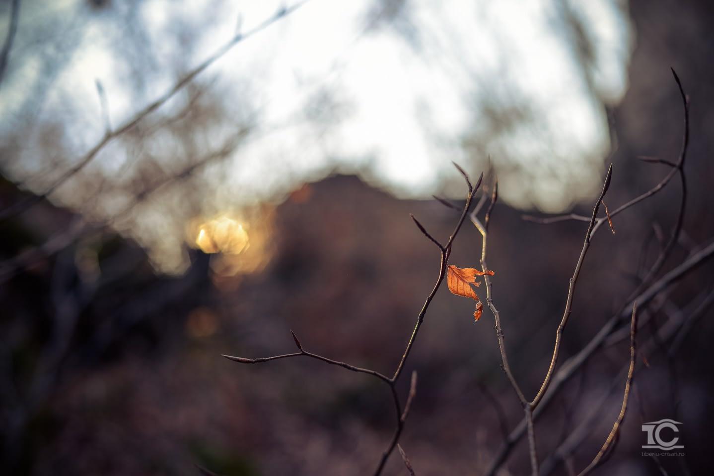gradina-zmeilor-02-2015-011