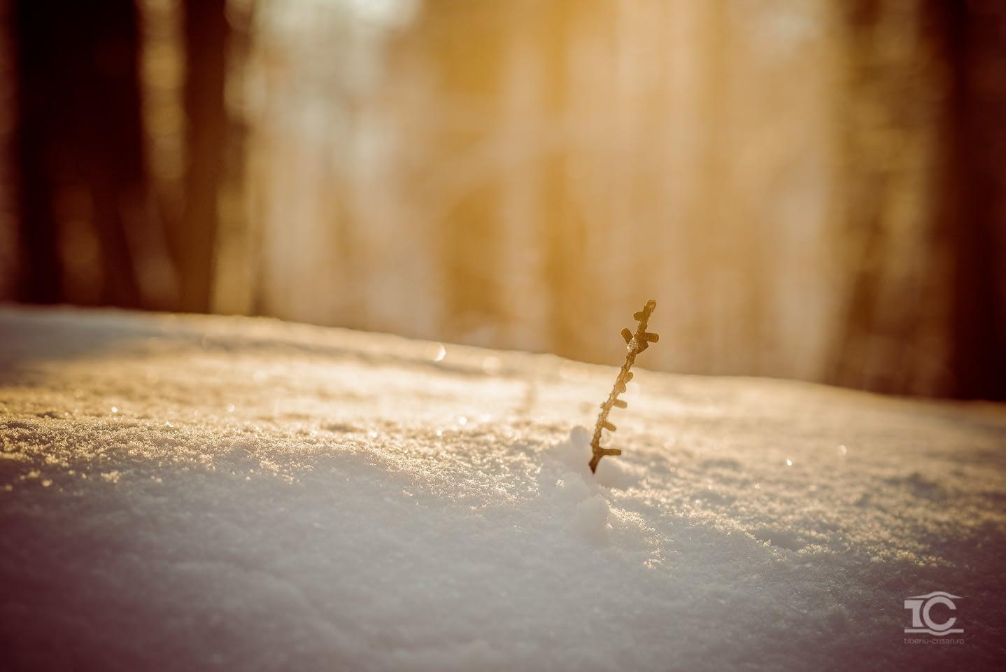 iarna-feleacu-010