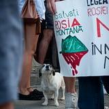 Protest impotriva distrugerii Rosiei Montane la Bucuresti