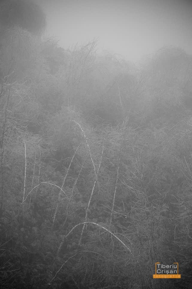 natura-inghetata-017