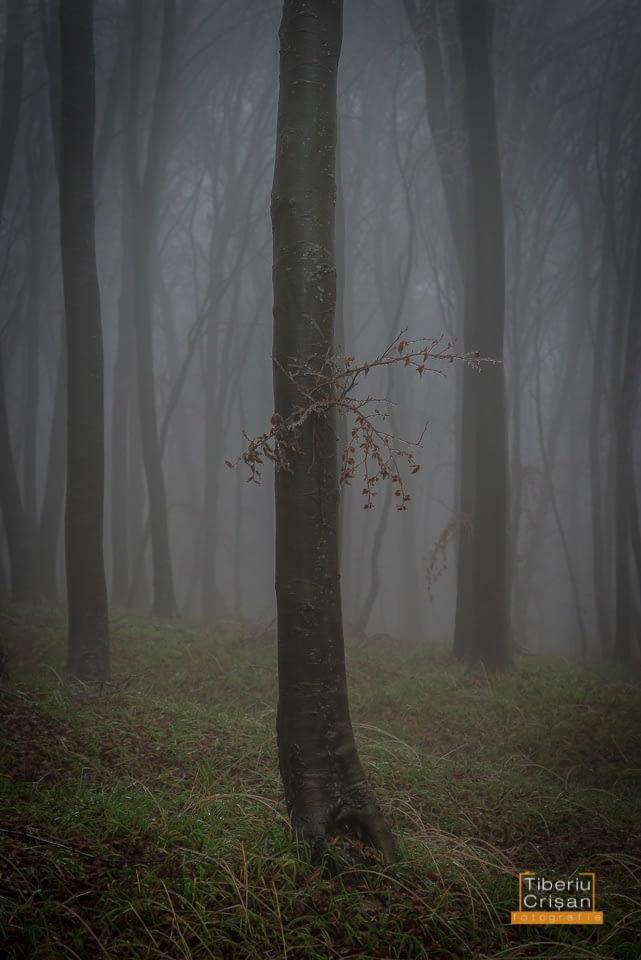 natura-inghetata-024