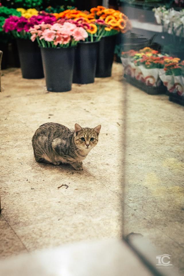 pisica-002