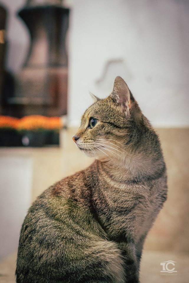 pisica-006